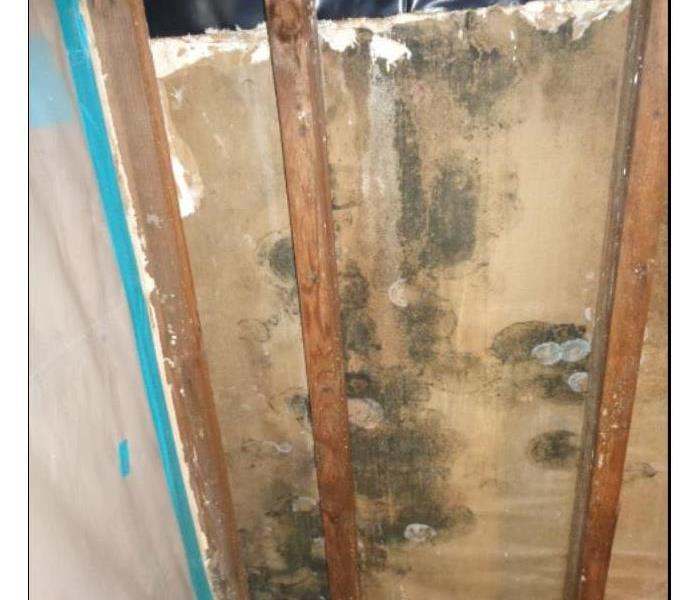 Laundry Storage Room affected by Mold Before