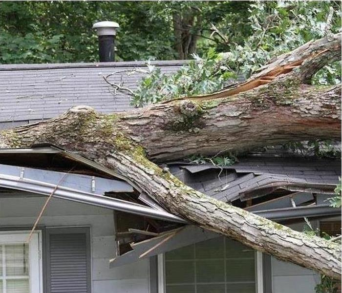 Storm Damage - Los Angeles