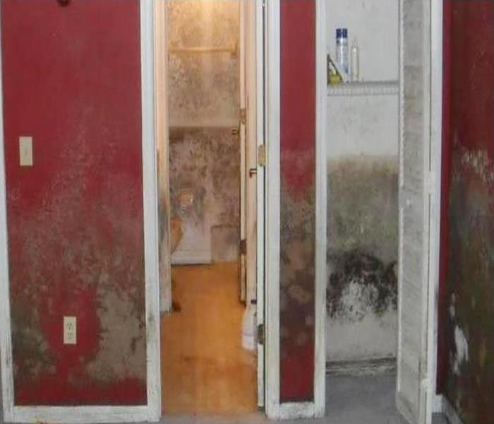 Mold Remediation In Angelino Heights