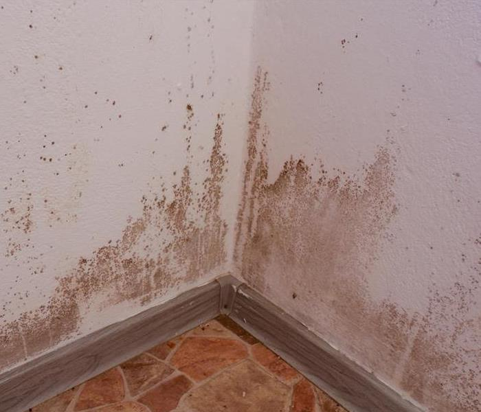 Why SERVPRO How SERVPRO Removes Mitigates Mold Damage in Your Los Angeles Home